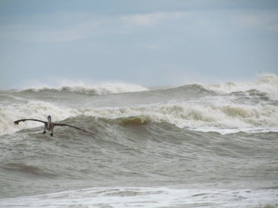 Galveston Island Foto