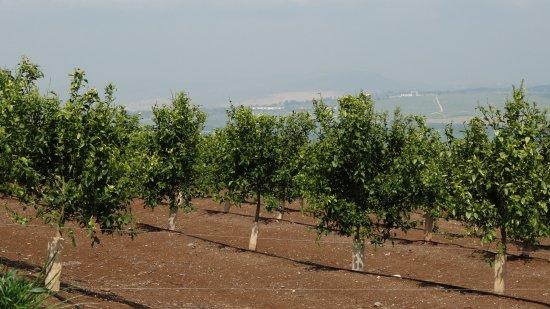 Galilee Photo