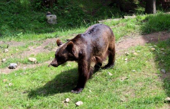 Rosengarten, Germany: Bär