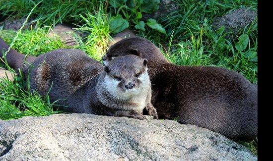 Rosengarten, เยอรมนี: Otter