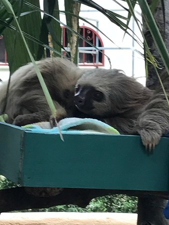 Dominical, Kosta Rika: A great way to see sloths close up.