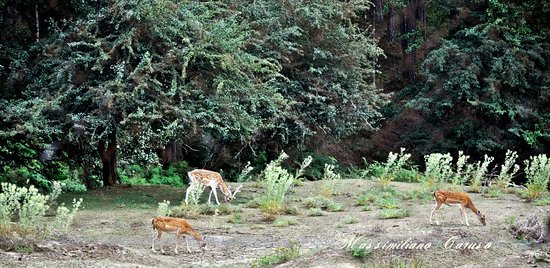 Sila National Park: i cervi