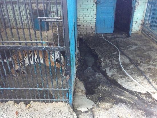 Nalchik Zoo