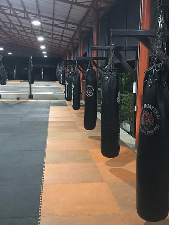 Tiger Muay Thai - Day Classes: photo3.jpg