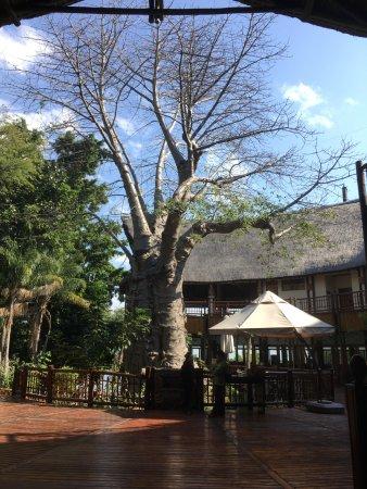 Cresta Mowana Safari Resort and Spa: De boom