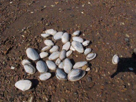 Les Épaves de la Baie de St-Simon
