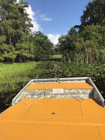 Saint Cloud, FL: In swampy waters..