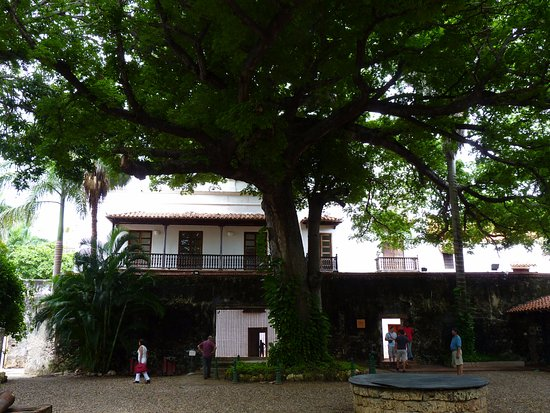 Museo Histórico de Cartagena de Indias: the gigantic tree that impressed me