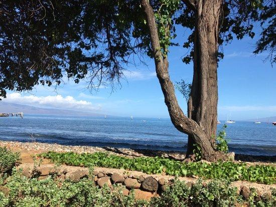 Aloha Mixed Plate: photo0.jpg
