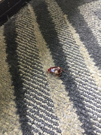 Hyatt Regency Hill Country Resort and Spa: Roaches and insects in our room during our stay in July. ~Hernandez Family~