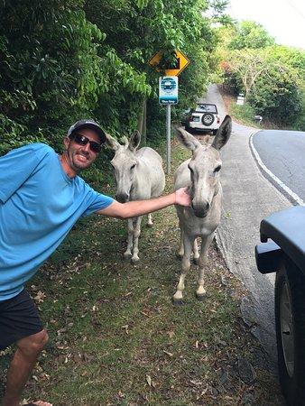 The Thirsty Donkey, St...