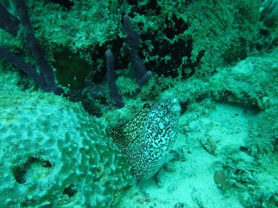 Eco Dive Barbados: photo0.jpg