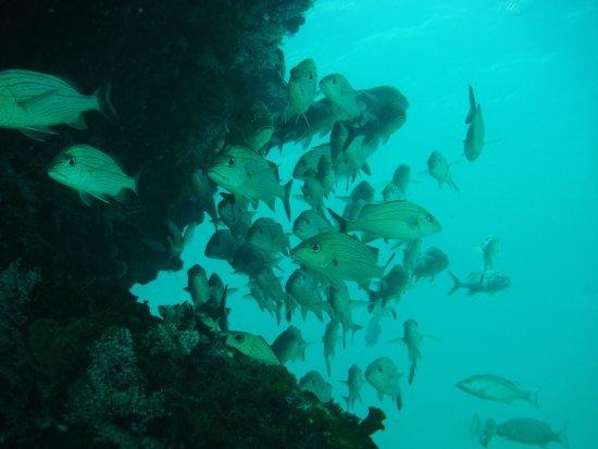 Eco Dive Barbados: photo1.jpg
