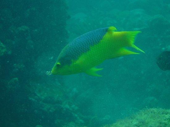 Eco Dive Barbados: photo2.jpg