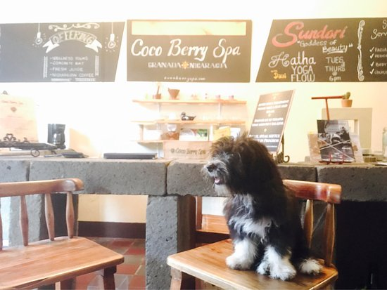 Coco Berry Spa Wellness by Daniela Prego : The spa puppy, only 3 months old!