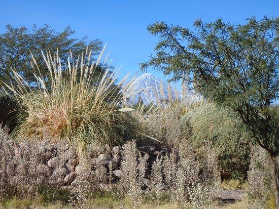Altiplanico Atacama: view of Volcan Licancabur