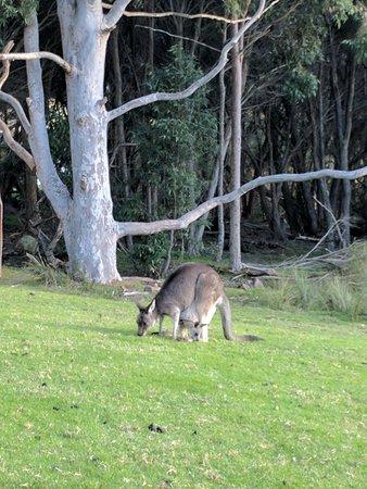 Narre Warren, Australia: IMG_20170630_155635_large.jpg