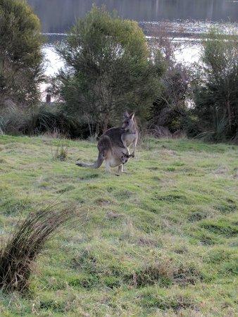 Narre Warren, Australia: IMG_20170630_155257_large.jpg