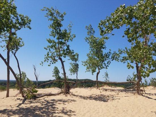 Saugatuck, Мичиган: Fun family dune ride!