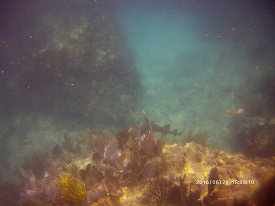 Tilden's Scuba Center: trying to catch up to the shark