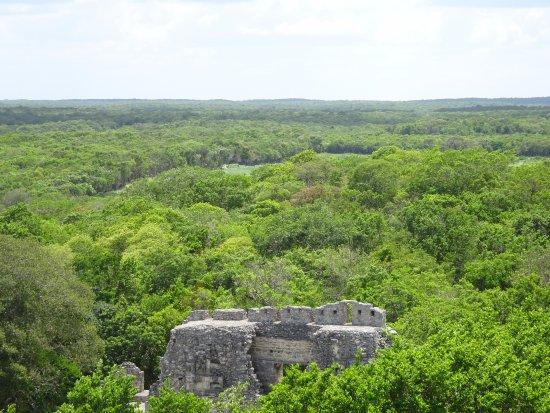 Becan Ruins: Estrctura X, sobresaliendo de la selva