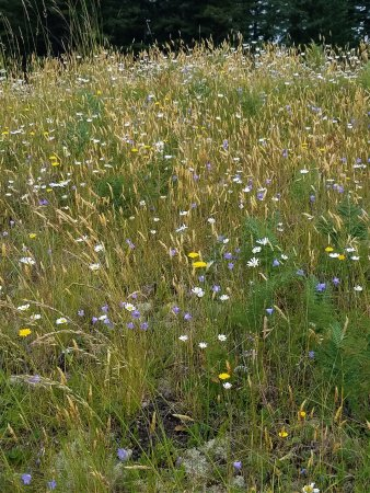 Mima Mounds Natural Area Preserve: Enjoy