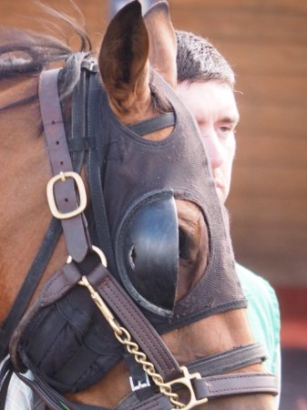 Grantville, PA: Walking of the Horse prior to race