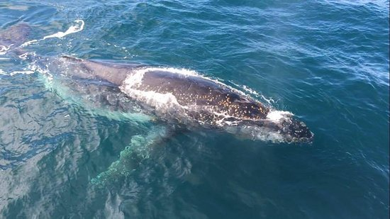 Cowes, Australia: Humpback whale two metres from the Kasey Lee