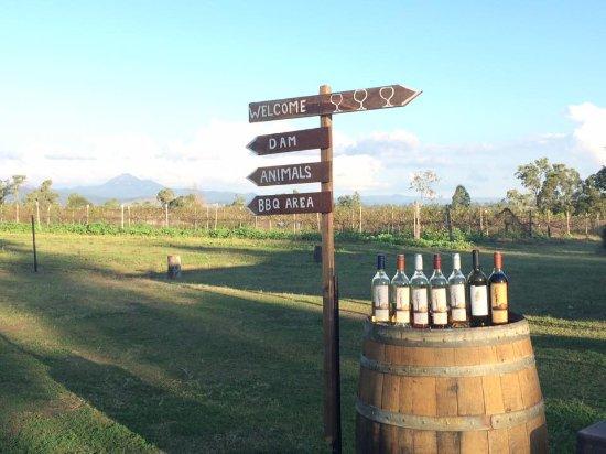 Ironbark Ridge Vineyard