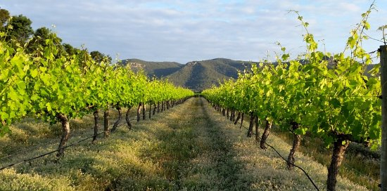 Broke, Australia: View from cellar door