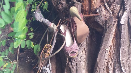 Fossil, Орегон: Can't remember the story of how/why these shoes ended up in the tree outside the front door.