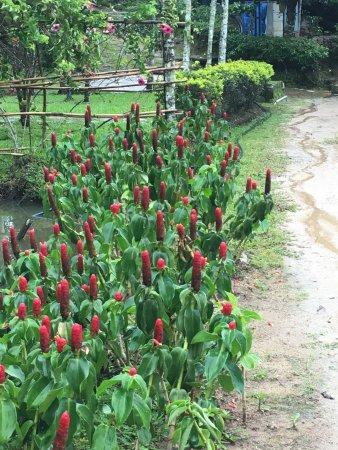 Marmalade Springs: photo0.jpg
