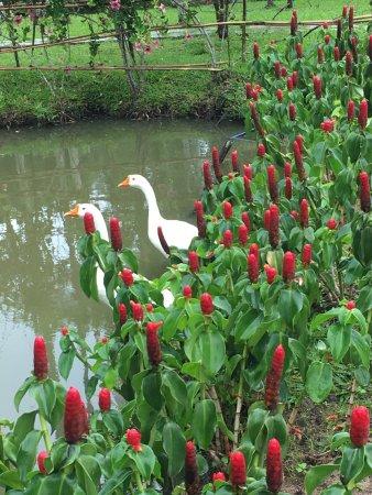 Marmalade Springs: photo1.jpg