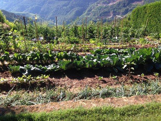 L'orto di Maso Pomarolli, da dove provengono tutte le fresche delizie servite ai pasti, colazion
