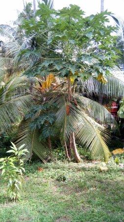 The Gateway Hotel Airport Garden Colombo: Garden 1