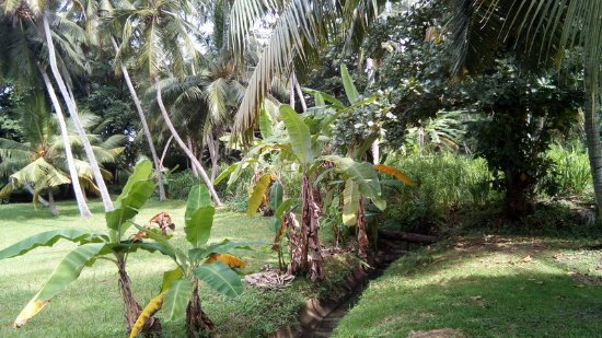 The Gateway Hotel Airport Garden Colombo: Garden 2