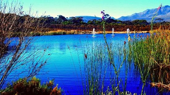 Херманус, Южная Африка: Benguela Cove