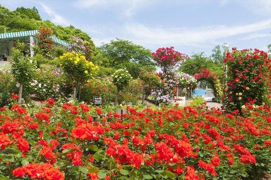 Hanamaki Onsen Rose Garden