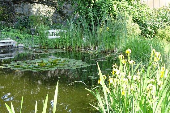 Kleiner Koi Teich im Garten Picture of Lubecker Kronchen, Lubeck TripAdvisor ~ 20185911_Kleiner Teich Im Garten Kosten