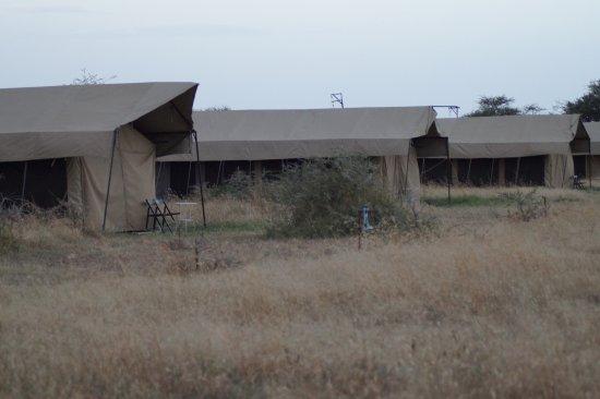 Serengeti Wild Camp Photo