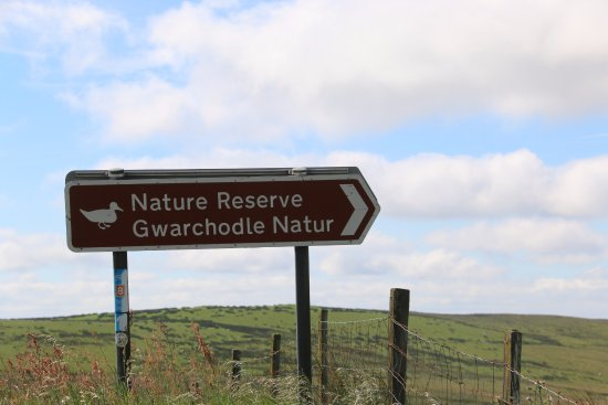 Llanbrynmair, UK: Nature Reserve close by