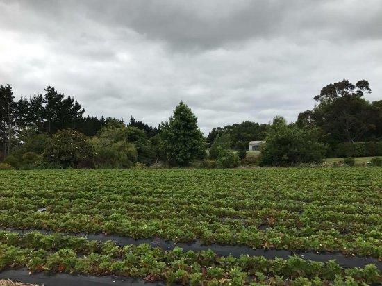 Kumeu, New Zealand: photo2.jpg
