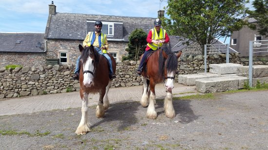 Cumnock, UK: You never looseyour overall view on a Clydesdale; you definitely sit higher than the rest.