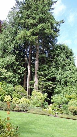 arbre majestueux picture of butchart gardens central saanich tripadvisor. Black Bedroom Furniture Sets. Home Design Ideas