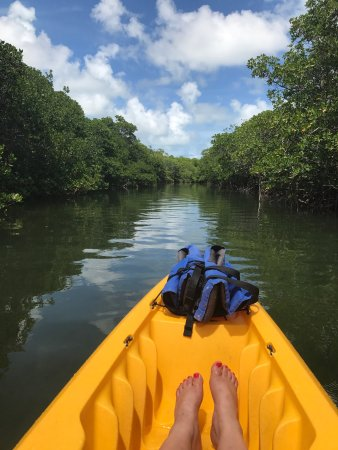 Lake Monroe, FL: Went kayaking at Robbie's through the mangroves- beautiful views & wildlife!