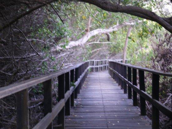 Puerto Villamil, Ecuador: Pasarelas seguras dentro del manglar.