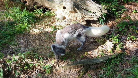 ชิปลีย์, ฟลอริด้า: Seacrest Wolf Preserve