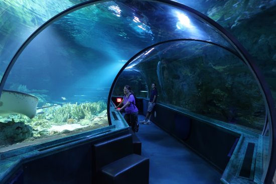 Tunnel through the big tank