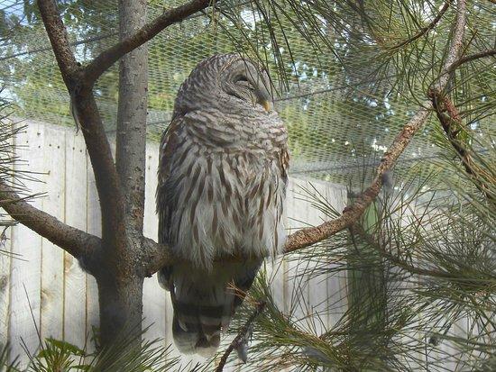 Kamloops Wildlife Park: BC Wildlife park, Kamloops