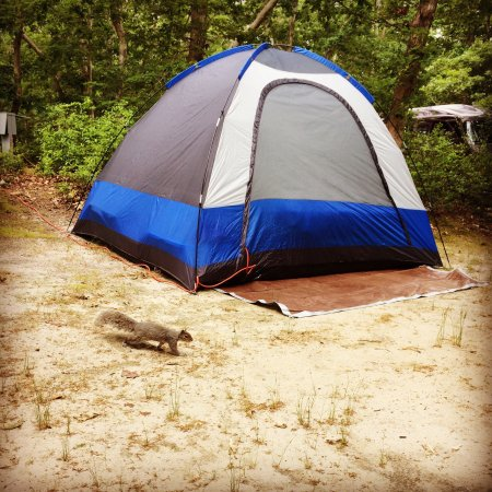 Martha's Vineyard Family Campground: photo0.jpg